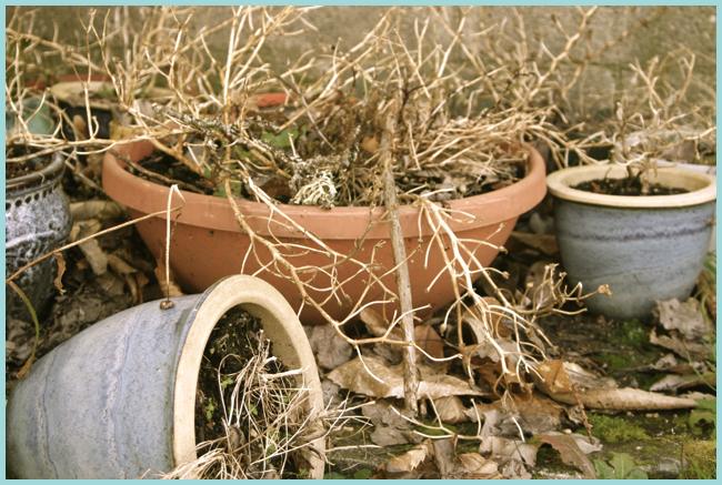 Tweedot blog magazine - piante appassite. Withered plants