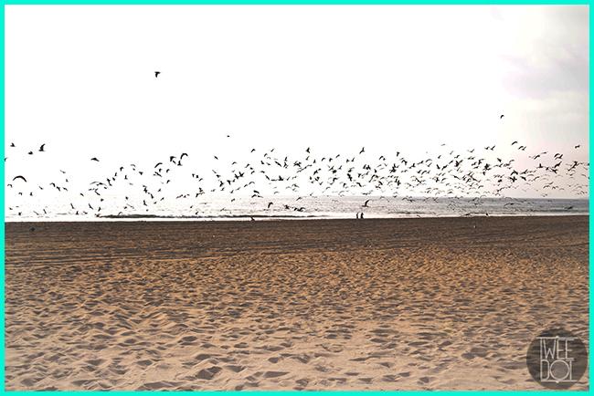 Tweedot blog magazine - Zuma beach Malibu