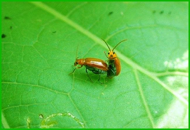 Tweedot blog magazine - insetti
