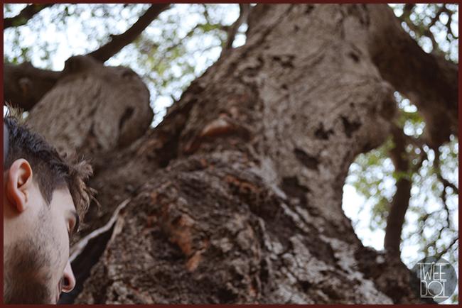 Tweedot blog magazine - viaggi in California, i boschi di Malibu