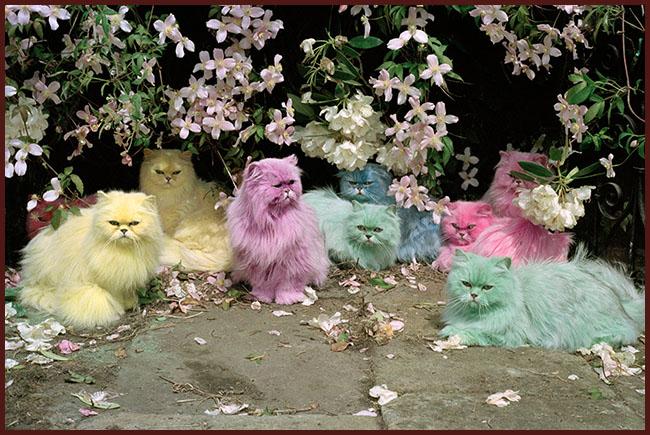 Tweedot blog magazine - Tim Walker pastel cats