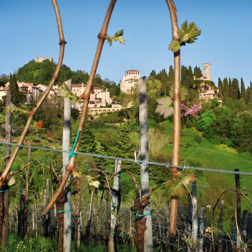 Asolo Wine Tasting - Tweedot blog